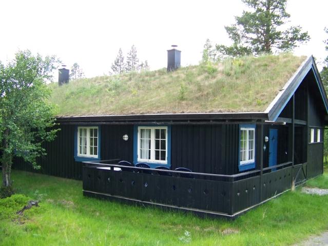 Greenest Roof